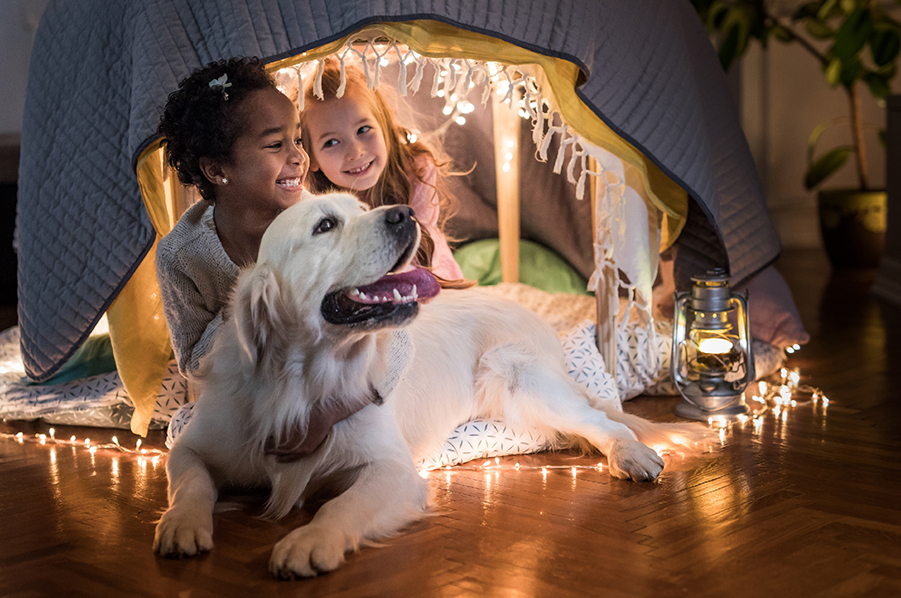 Blog --Optimizing your home for your pets_Blog Image