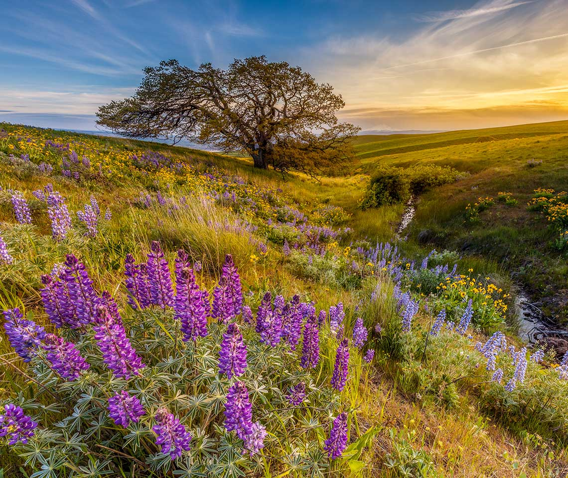 A tree in the middle of wildflowers
